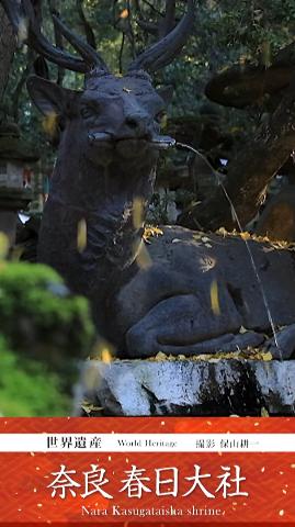 春日大社の春夏秋冬。保山耕一撮影動画、近鉄デジタルサイネージ。